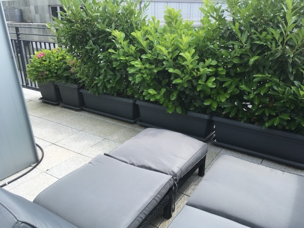 for rent apartment in Trier