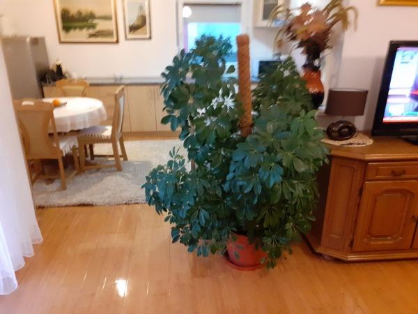 vila, Trebinje, prodaje se vila, vila na prodaju Trebinje, vila Grad Sunca